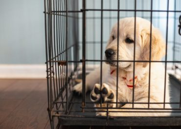 Optimize Your Dog's Crate Experience