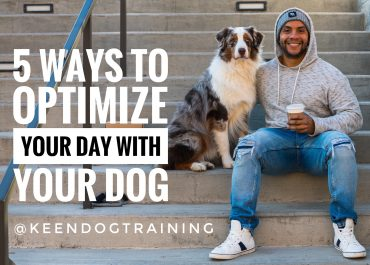 5 Ways To Optimize Your Day With Your Dog